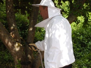 Darren of Isca Pest Control removal a wasp nest