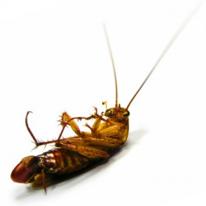 Insect Control & Removal