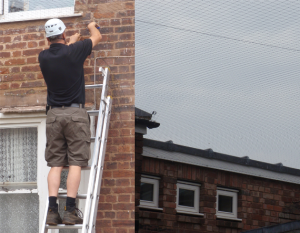 Darren of Isca Pest Control bird proofing a building