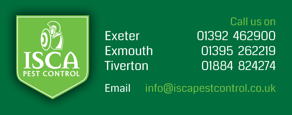 Isca Pest Control - rodent, insect & bird control & pest prevention in Exeter, Devon