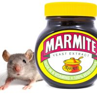 Mice are like marmite, you either love them or hate them!