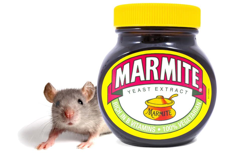 Marmite Mouse Isca Pest Control Exeter rodent pest services